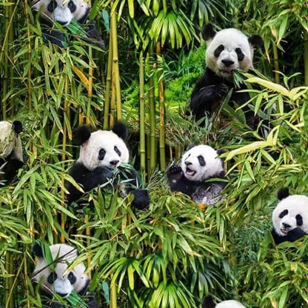 Ernst Textil - Panda's bambupanda